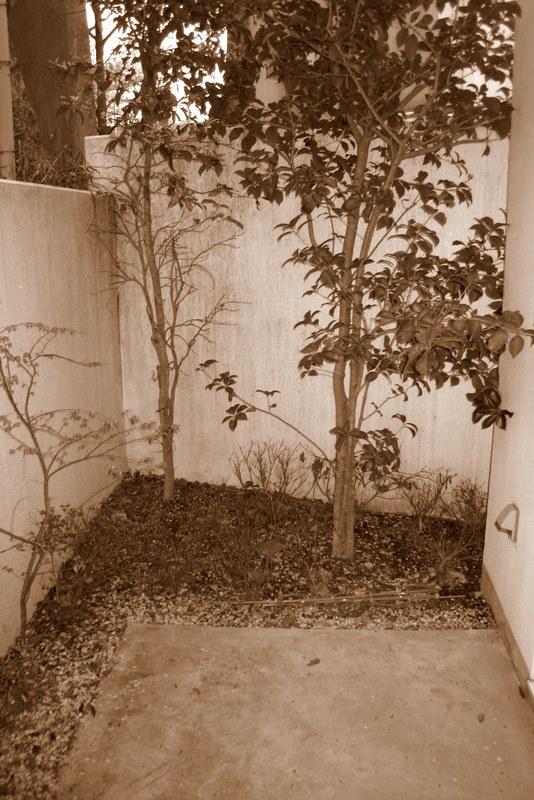 花咲園芸総研 舘林正也 施工例 日陰のテラス