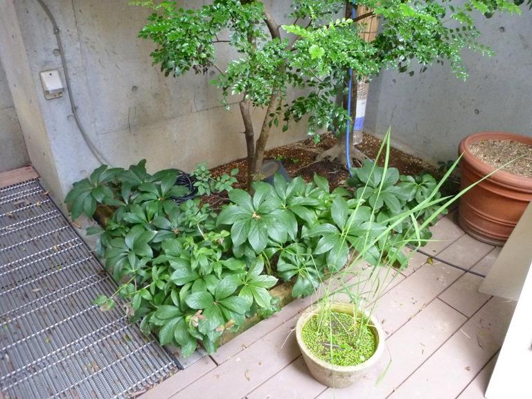 花咲園芸総研 舘林正也 施工例 店舗まわりの花壇・植栽